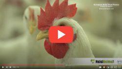 EHT - European Halal Trust - Videos